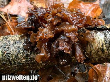 Rotbrauner Zitterling, Blattartiger Zitterling, Tremella foliacea